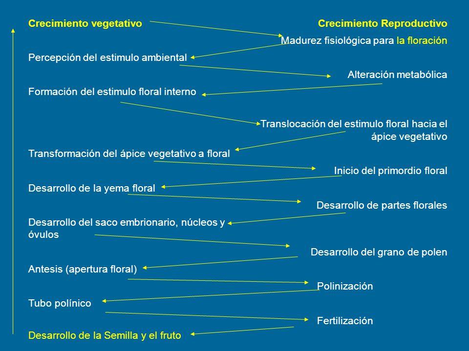 Crecimiento vegetativoCrecimiento Reproductivo Madurez fisiológica para la floración Percepción del estimulo ambiental Alteración metabólica Formación