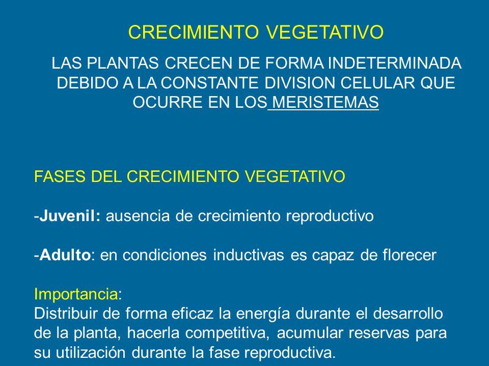 CRECIMIENTO VEGETATIVO LAS PLANTAS CRECEN DE FORMA INDETERMINADA DEBIDO A LA CONSTANTE DIVISION CELULAR QUE OCURRE EN LOS MERISTEMAS FASES DEL CRECIMI