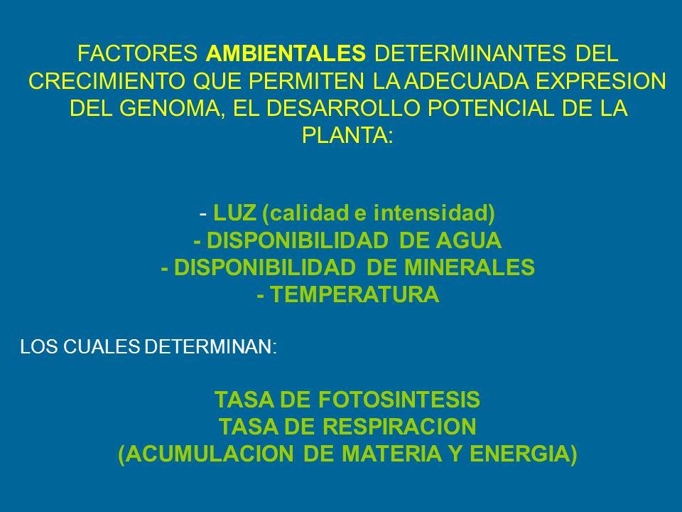 FACTORES AMBIENTALES DETERMINANTES DEL CRECIMIENTO QUE PERMITEN LA ADECUADA EXPRESION DEL GENOMA, EL DESARROLLO POTENCIAL DE LA PLANTA: - LUZ (calidad