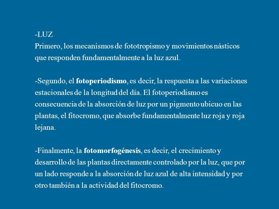 -LUZ Primero, los mecanismos de fototropismo y movimientos násticos que responden fundamentalmente a la luz azul. -Segundo, el fotoperiodismo, es deci