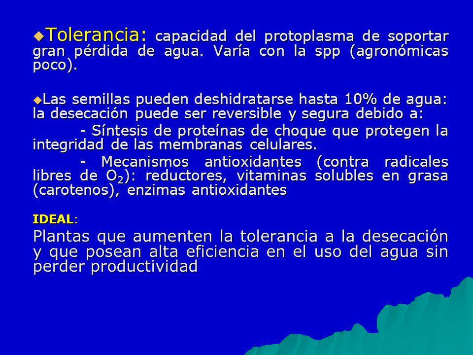 Tolerancia: capacidad del protoplasma de soportar gran pérdida de agua. Varía con la spp (agronómicas poco). Tolerancia: capacidad del protoplasma de