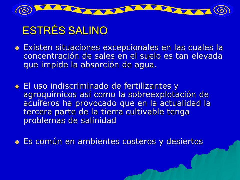 ESTRÉS SALINO Existen situaciones excepcionales en las cuales la concentración de sales en el suelo es tan elevada que impide la absorción de agua. Ex