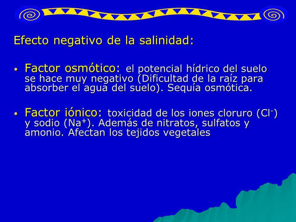 Efecto negativo de la salinidad: Factor osmótico: el potencial hídrico del suelo se hace muy negativo (Dificultad de la raíz para absorber el agua del
