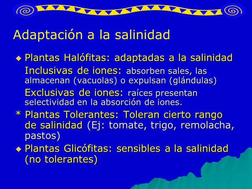 Plantas Halófitas: adaptadas a la salinidad Plantas Halófitas: adaptadas a la salinidad Inclusivas de iones: absorben sales, las almacenan (vacuolas)