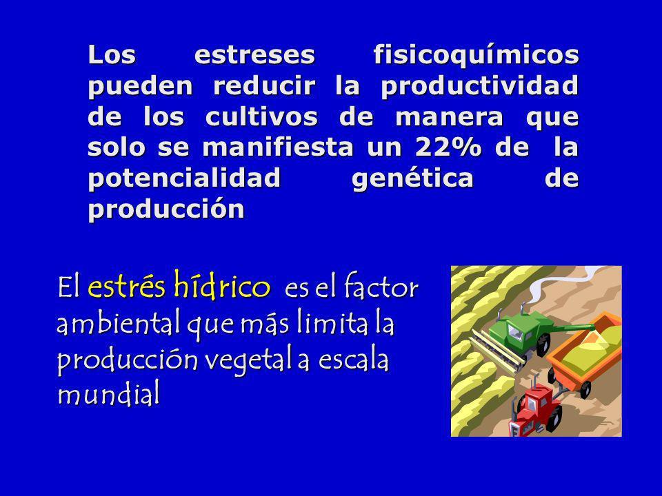 El estrés hídrico es el factor ambiental que más limita la producción vegetal a escala mundial Los estreses fisicoquímicos pueden reducir la productiv
