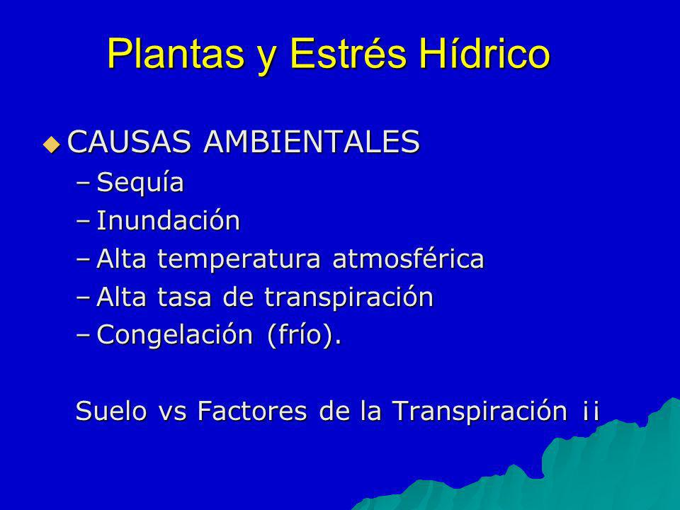 CAUSAS AMBIENTALES CAUSAS AMBIENTALES –Sequía –Inundación –Alta temperatura atmosférica –Alta tasa de transpiración –Congelación (frío). Suelo vs Fact