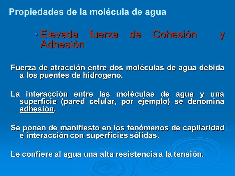 Elevada fuerza de Cohesión y AdhesiónElevada fuerza de Cohesión y Adhesión Fuerza de atracción entre dos moléculas de agua debida a los puentes de hid