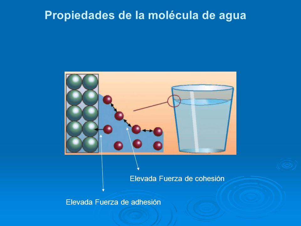 Elevada Fuerza de cohesión Elevada Fuerza de adhesión Propiedades de la molécula de agua