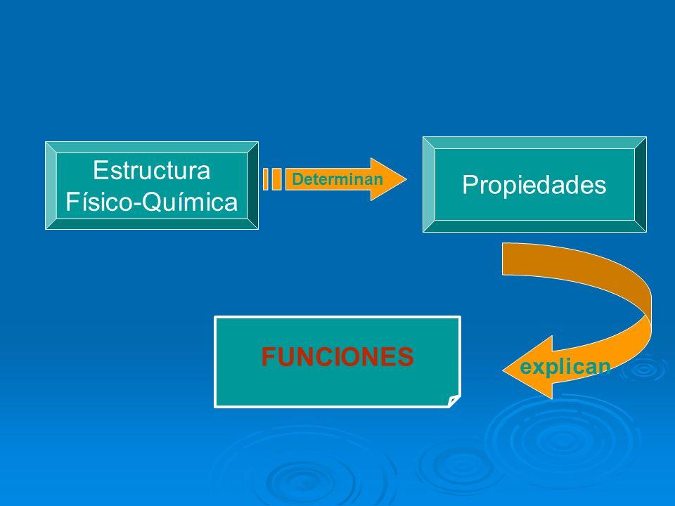 Propiedades Estructura Físico-Química FUNCIONES Determinan explican