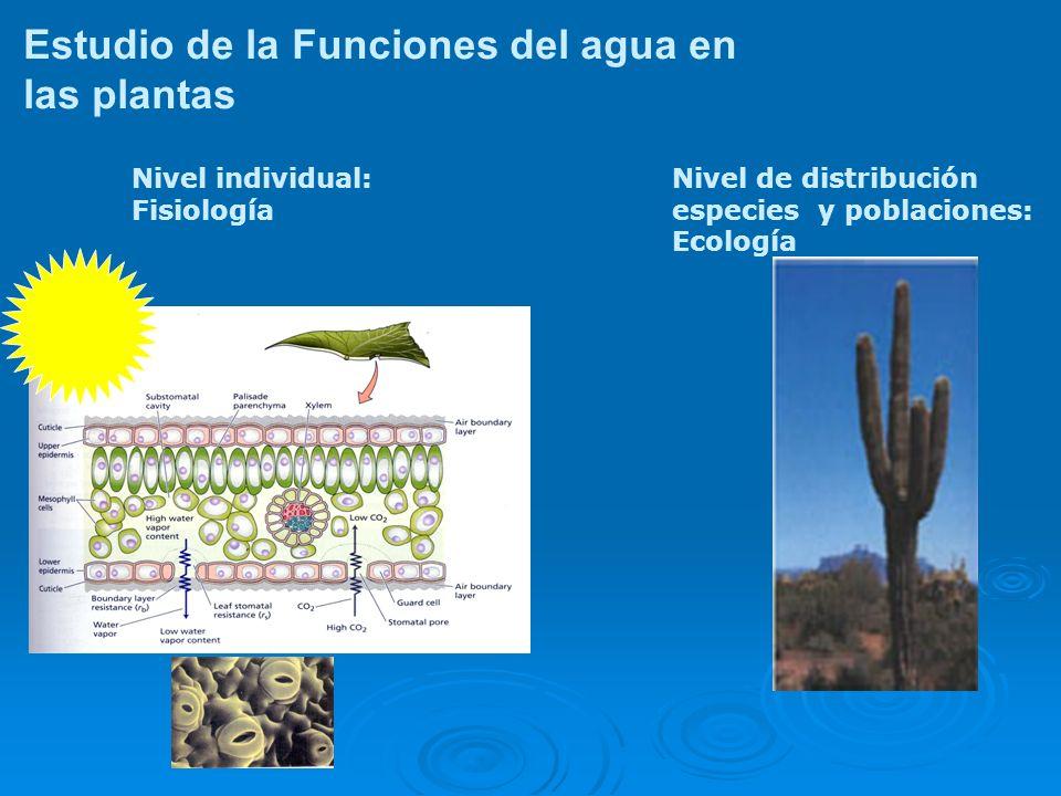 Estudio de la Funciones del agua en las plantas Nivel de distribución especies y poblaciones: Ecología Nivel individual: Fisiología