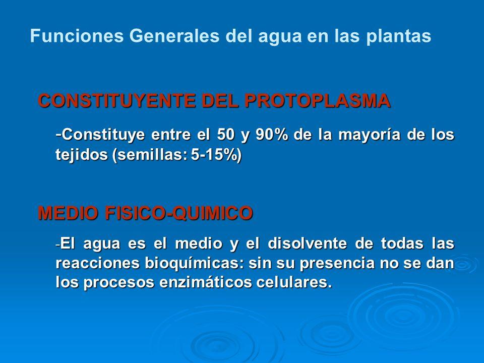 CONSTITUYENTE DEL PROTOPLASMA - Constituye entre el 50 y 90% de la mayoría de los tejidos (semillas: 5-15%) MEDIO FISICO-QUIMICO - El agua es el medio