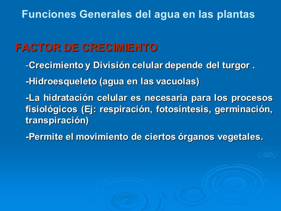 FACTOR DE CRECIMIENTO -Crecimiento y División celular depende del turgor. -Hidroesqueleto (agua en las vacuolas) -La hidratación celular es necesaria
