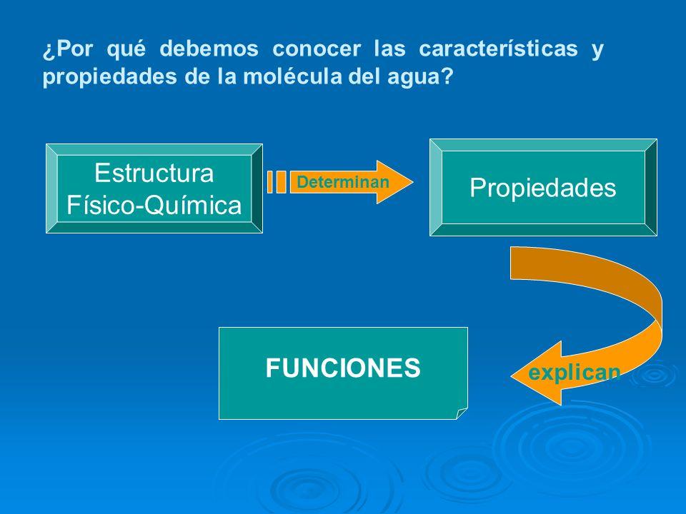 Propiedades Estructura Físico-Química FUNCIONES Determinan explican ¿Por qué debemos conocer las características y propiedades de la molécula del agua