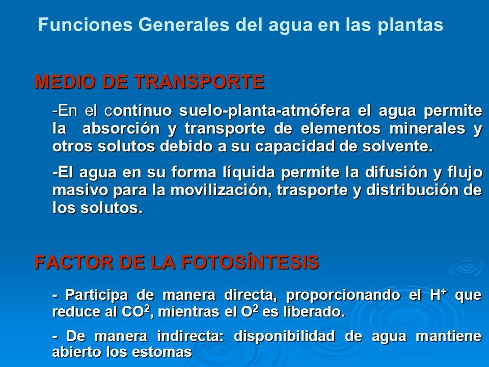 MEDIO DE TRANSPORTE -En el contínuo suelo-planta-atmófera el agua permite la absorción y transporte de elementos minerales y otros solutos debido a su
