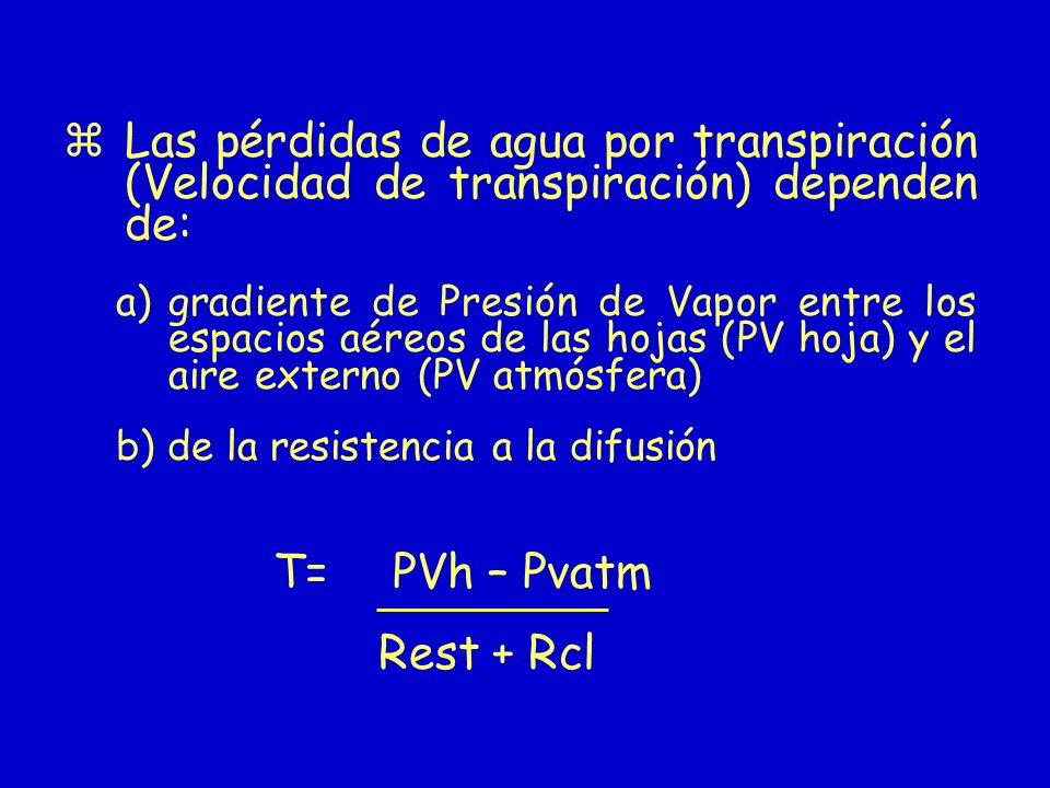 Las pérdidas de agua por transpiración (Velocidad de transpiración) dependen de: a)gradiente de Presión de Vapor entre los espacios aéreos de las hoja