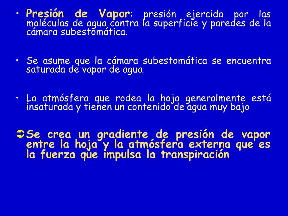 Presión de Vapor : presión ejercida por las moléculas de agua contra la superficie y paredes de la cámara subestomática. Se asume que la cámara subest