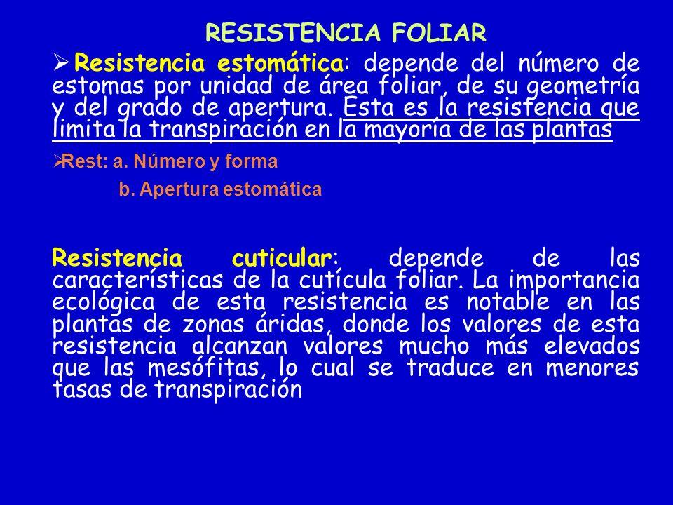 RESISTENCIA FOLIAR Resistencia estomática: depende del número de estomas por unidad de área foliar, de su geometría y del grado de apertura. Esta es l