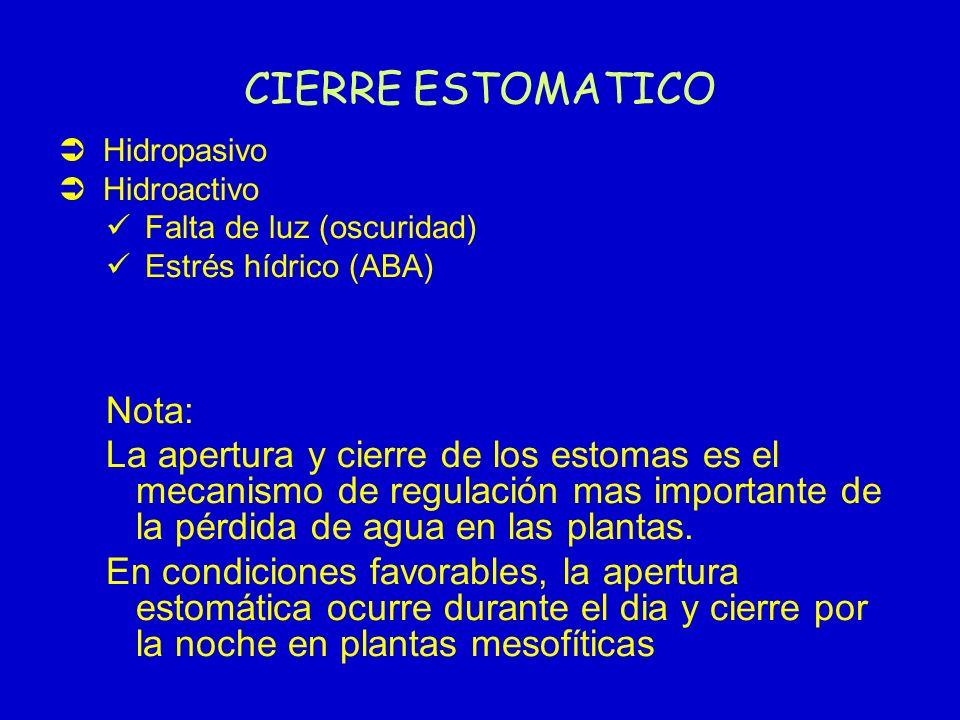 CIERRE ESTOMATICO Hidropasivo Hidroactivo Falta de luz (oscuridad) Estrés hídrico (ABA) Nota: La apertura y cierre de los estomas es el mecanismo de r