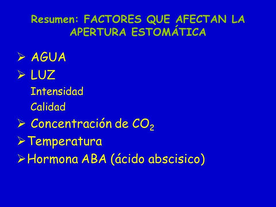Resumen: FACTORES QUE AFECTAN LA APERTURA ESTOMÁTICA AGUA LUZ Intensidad Calidad Concentración de CO 2 Temperatura Hormona ABA (ácido abscisico)