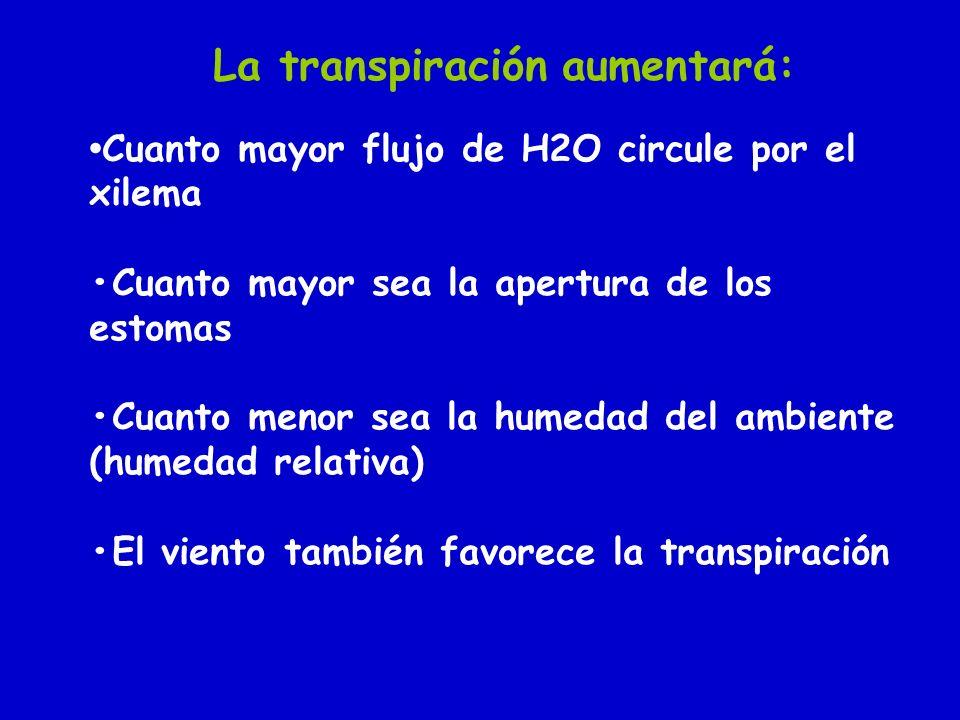 Cuanto mayor flujo de H2O circule por el xilema Cuanto mayor sea la apertura de los estomas Cuanto menor sea la humedad del ambiente (humedad relativa