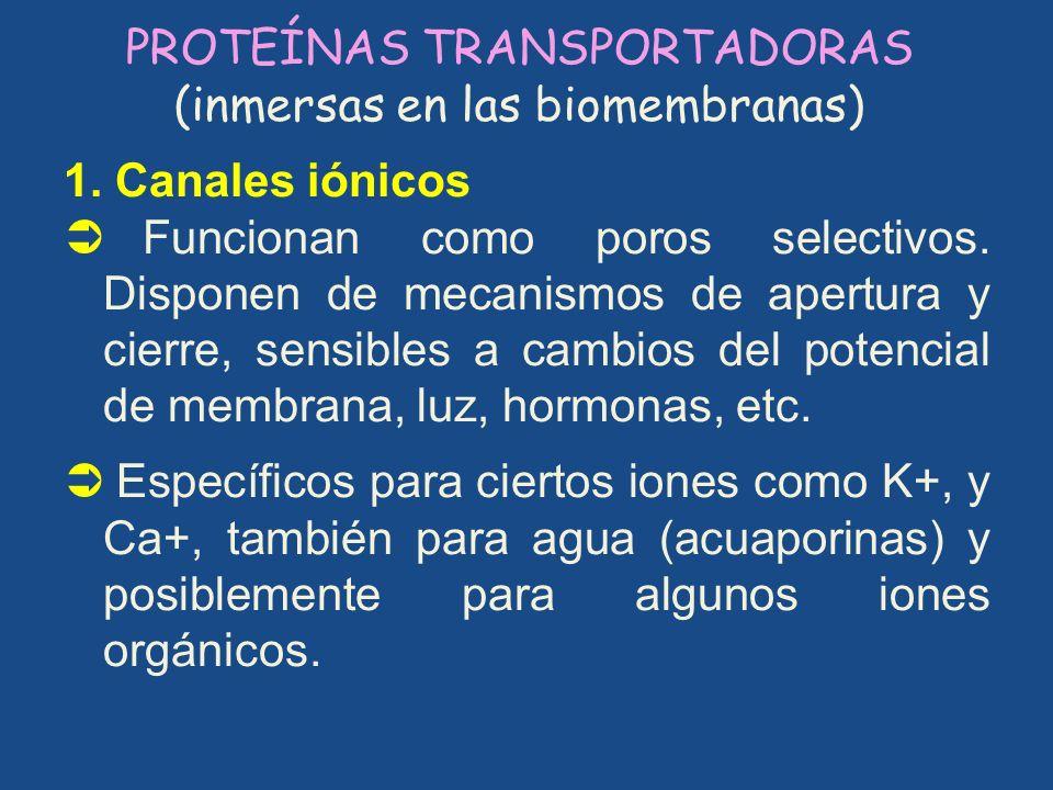 PROTEÍNAS TRANSPORTADORAS (inmersas en las biomembranas) 1. Canales iónicos Funcionan como poros selectivos. Disponen de mecanismos de apertura y cier