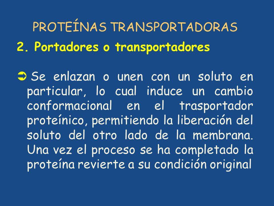PROTEÍNAS TRANSPORTADORAS 2. Portadores o transportadores Se enlazan o unen con un soluto en particular, lo cual induce un cambio conformacional en el