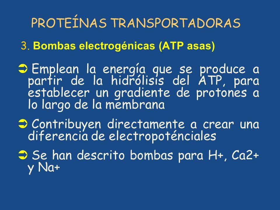 PROTEÍNAS TRANSPORTADORAS 3. Bombas electrogénicas (ATP asas) Emplean la energía que se produce a partir de la hidrólisis del ATP, para establecer un