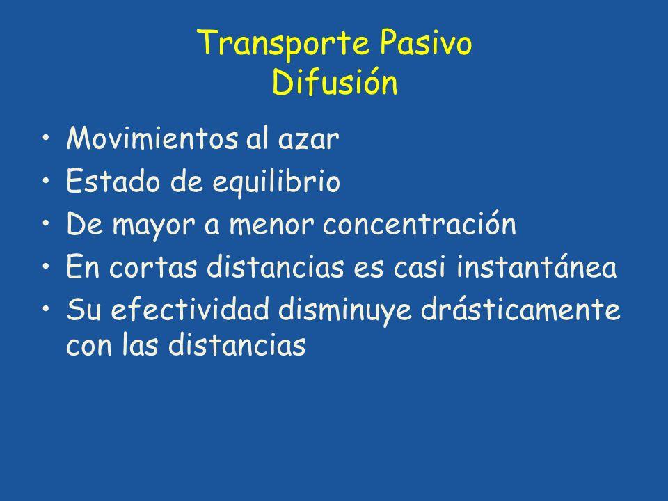 Transporte Pasivo Difusión Movimientos al azar Estado de equilibrio De mayor a menor concentración En cortas distancias es casi instantánea Su efectiv