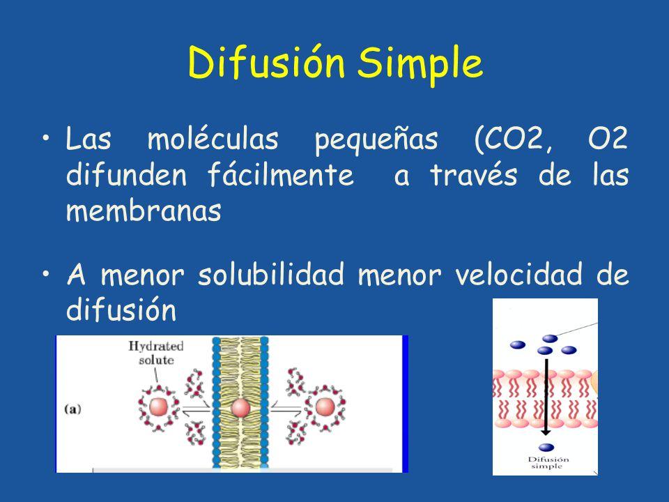Difusión Simple Las moléculas pequeñas (CO2, O2 difunden fácilmente a través de las membranas A menor solubilidad menor velocidad de difusión