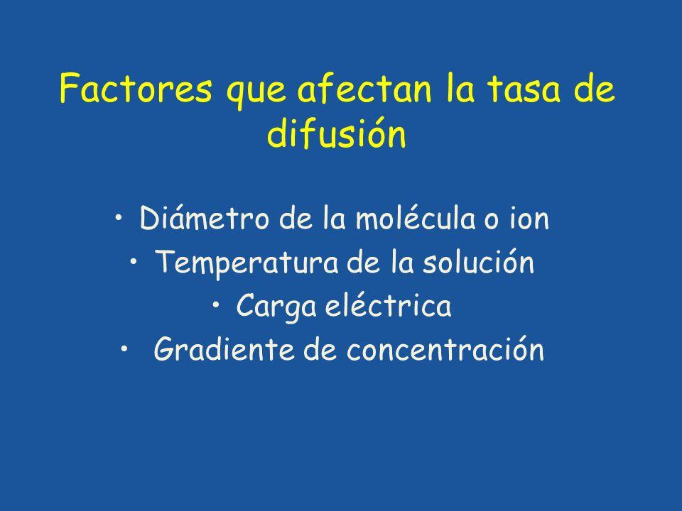 Factores que afectan la tasa de difusión Diámetro de la molécula o ion Temperatura de la solución Carga eléctrica Gradiente de concentración