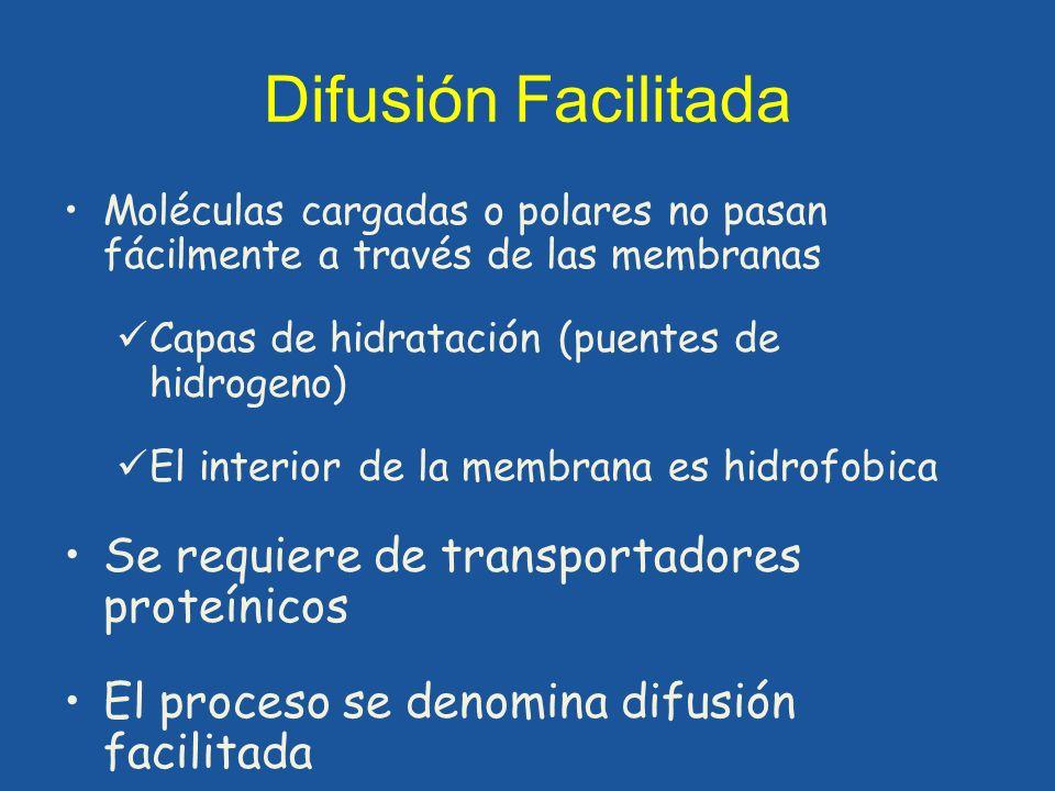 Difusión Facilitada Moléculas cargadas o polares no pasan fácilmente a través de las membranas Capas de hidratación (puentes de hidrogeno) El interior