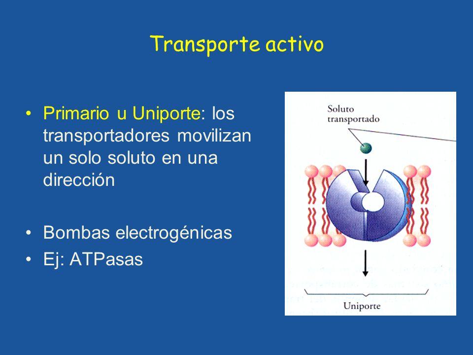 Transporte activo Primario u Uniporte: los transportadores movilizan un solo soluto en una dirección Bombas electrogénicas Ej: ATPasas