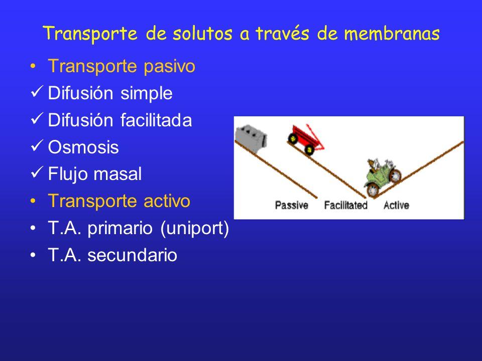 Transporte de solutos a través de membranas Transporte pasivo Difusión simple Difusión facilitada Osmosis Flujo masal Transporte activo T.A. primario