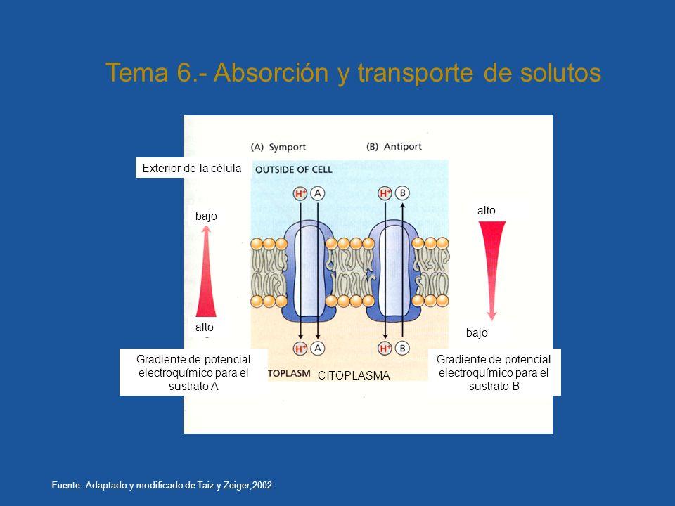 Gradiente de potencial electroquímico para el sustrato B Gradiente de potencial electroquímico para el sustrato A Exterior de la célula CITOPLASMA alt