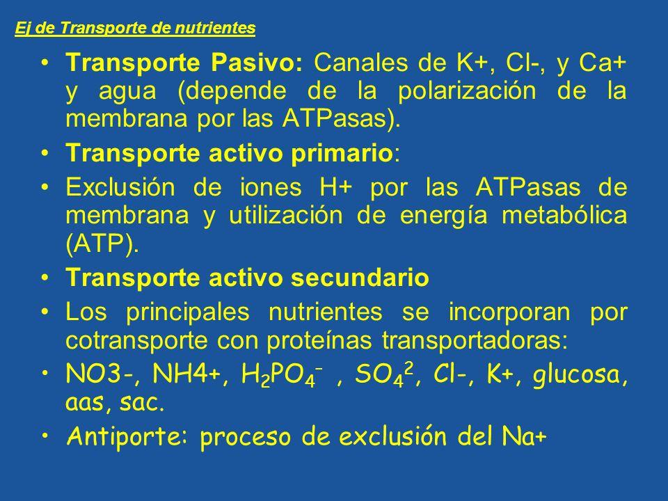Transporte Pasivo: Canales de K+, Cl-, y Ca+ y agua (depende de la polarización de la membrana por las ATPasas). Transporte activo primario: Exclusión