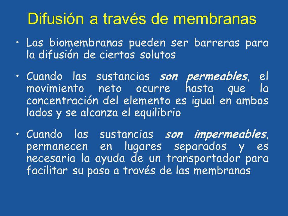 Difusión a través de membranas Las biomembranas pueden ser barreras para la difusión de ciertos solutos Cuando las sustancias son permeables, el movim