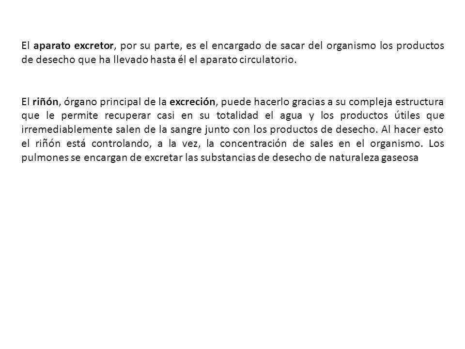 EL APARATO EXCRETOR SE ENCARGA DE RETIRAR LOS PRODUCTOS DE DESECHO QUE LLEVA EL APARATO CIRCULATORIO.
