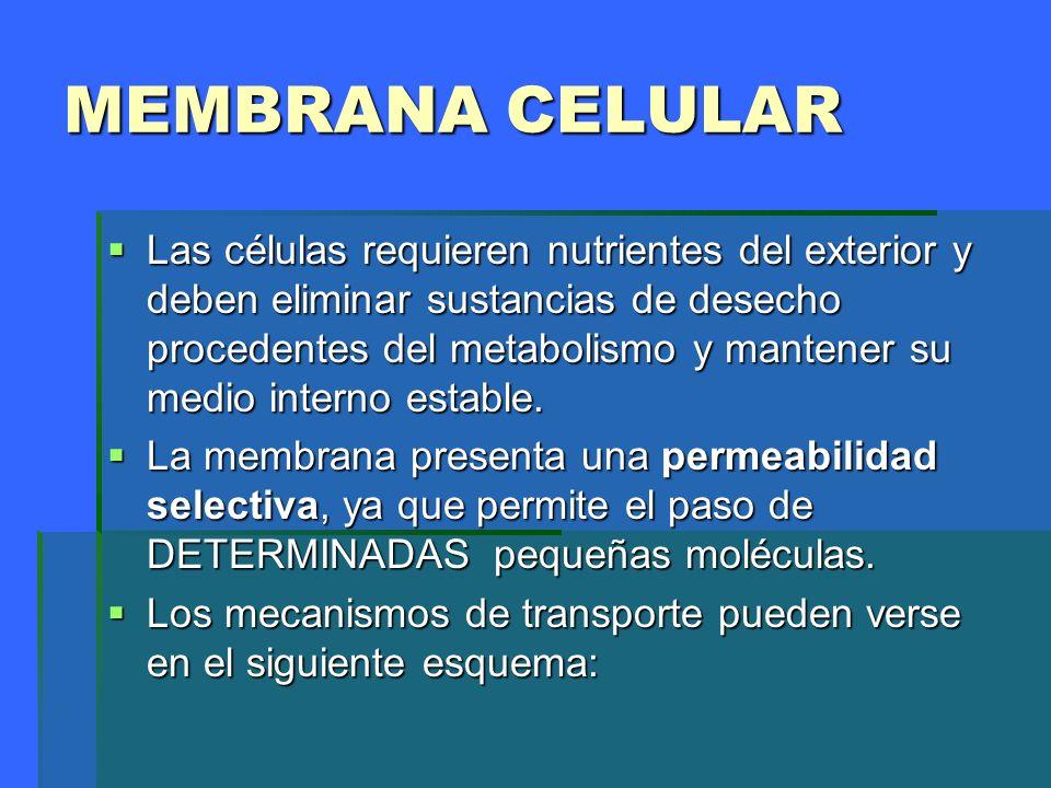 MEMBRANA CELULAR Las células requieren nutrientes del exterior y deben eliminar sustancias de desecho procedentes del metabolismo y mantener su medio