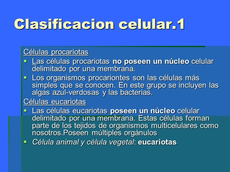 Celula procariota vídeo