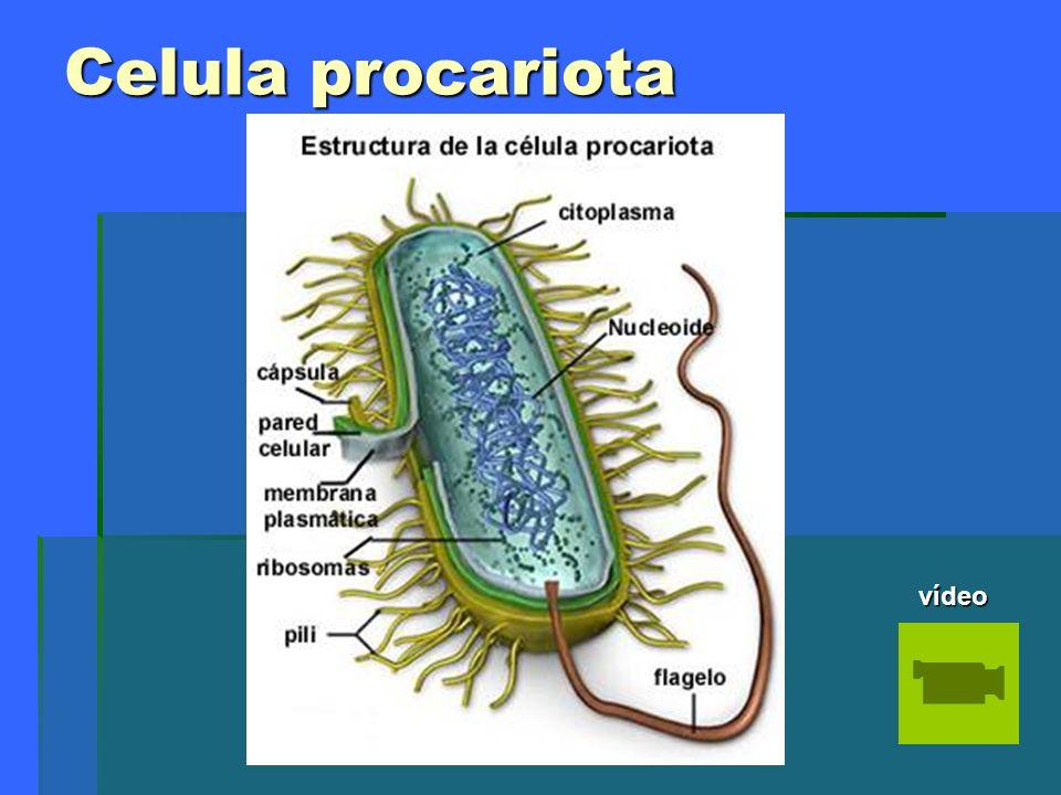 Célula eucariota.