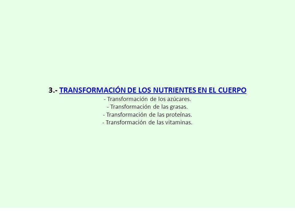 3.- TRANSFORMACIÓN DE LOS NUTRIENTES EN EL CUERPOTRANSFORMACIÓN DE LOS NUTRIENTES EN EL CUERPO - Transformación de los azúcares. - Transformación de l