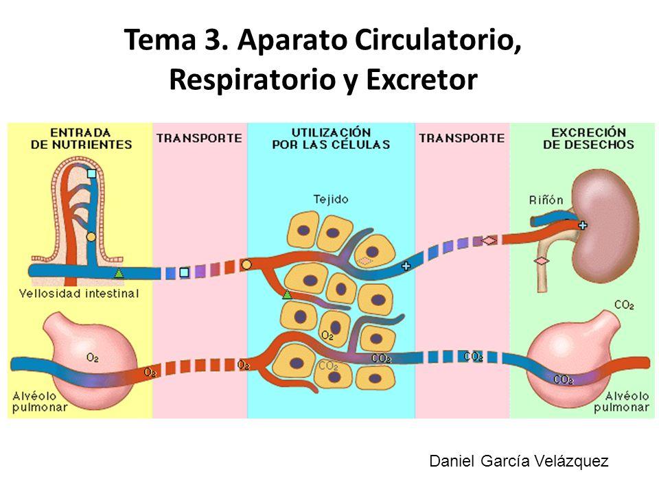 Tema 3. Aparato Circulatorio, Respiratorio y Excretor Daniel García Velázquez