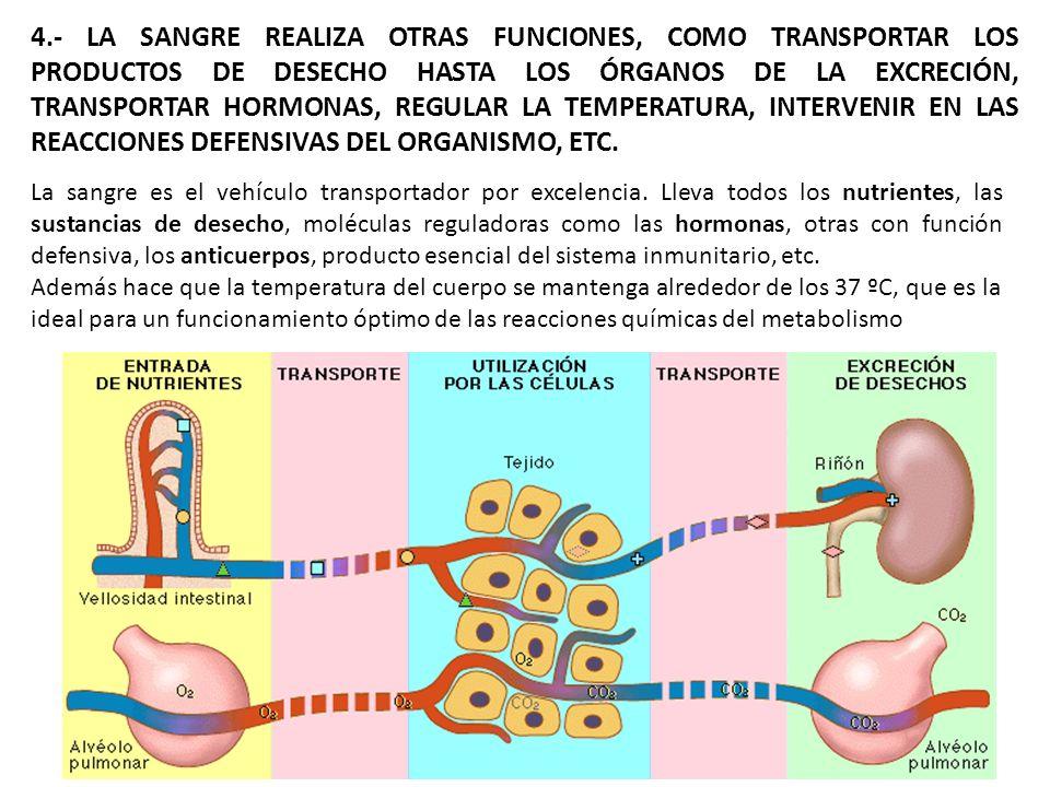 4.- LA SANGRE REALIZA OTRAS FUNCIONES, COMO TRANSPORTAR LOS PRODUCTOS DE DESECHO HASTA LOS ÓRGANOS DE LA EXCRECIÓN, TRANSPORTAR HORMONAS, REGULAR LA T