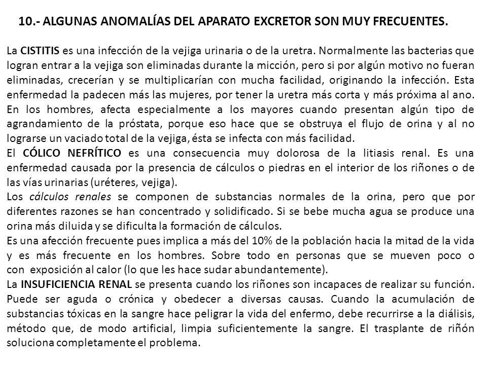 10.- ALGUNAS ANOMALÍAS DEL APARATO EXCRETOR SON MUY FRECUENTES. La CISTITIS es una infección de la vejiga urinaria o de la uretra. Normalmente las bac