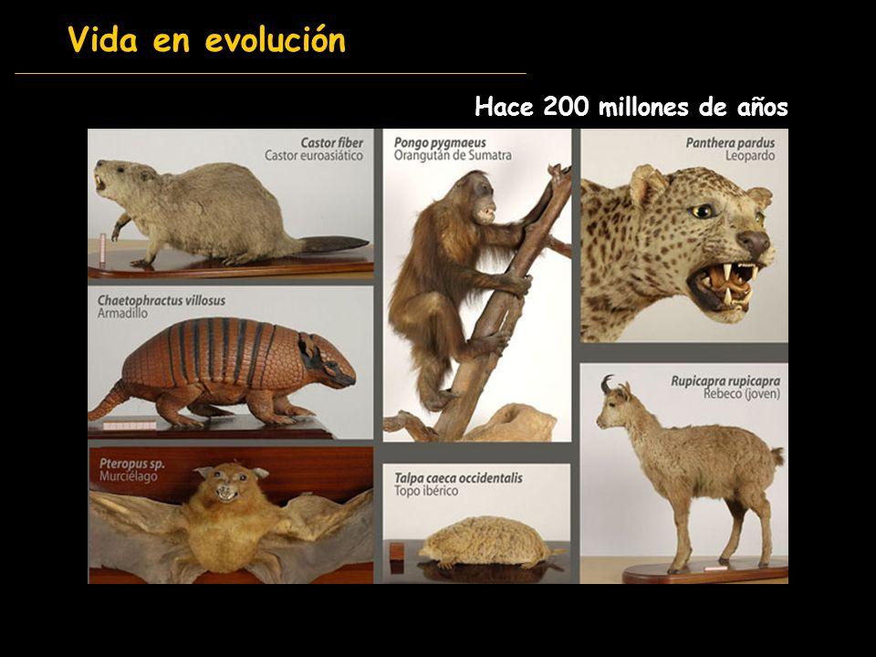 Vida en evolución Hace 200 millones de años