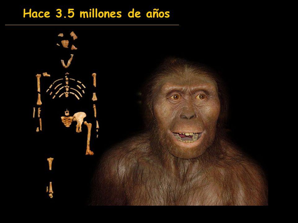 Hace 3.5 millones de años