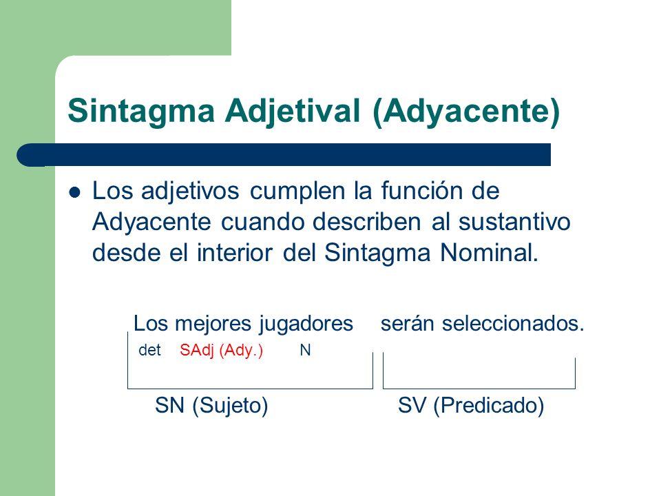 Sintagma Adjetival (Adyacente) Los adjetivos cumplen la función de Adyacente cuando describen al sustantivo desde el interior del Sintagma Nominal. Lo
