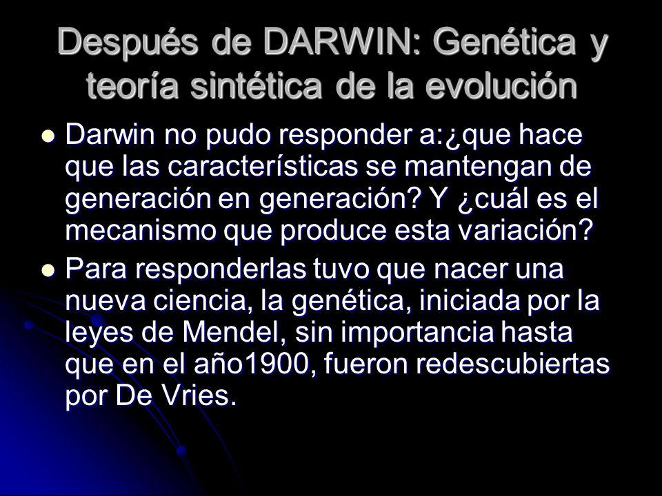 Después de DARWIN: Genética y teoría sintética de la evolución Darwin no pudo responder a:¿que hace que las características se mantengan de generación