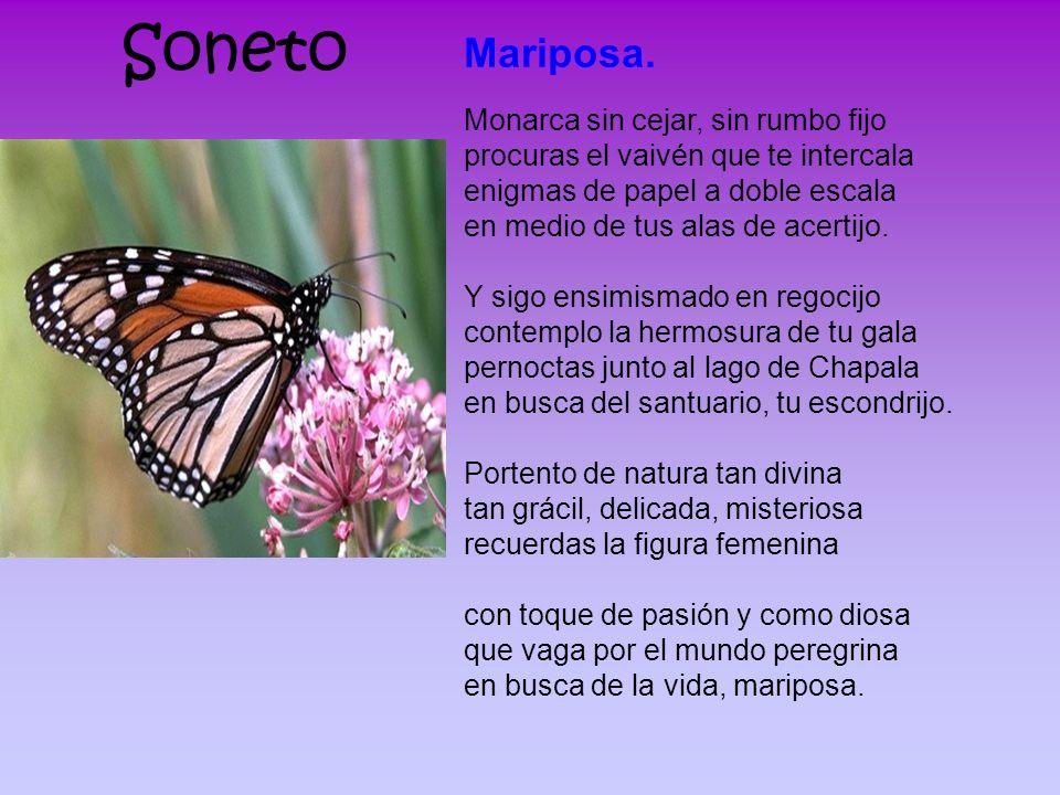 Soneto Mariposa. Monarca sin cejar, sin rumbo fijo procuras el vaivén que te intercala enigmas de papel a doble escala en medio de tus alas de acertij