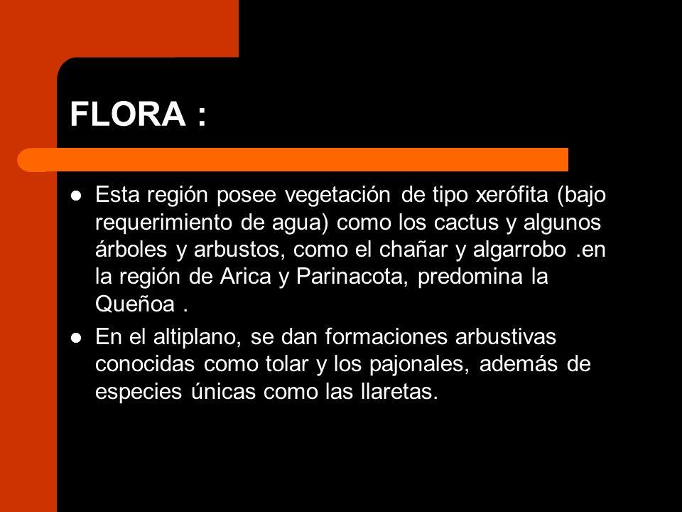 FLORA : Esta región posee vegetación de tipo xerófita (bajo requerimiento de agua) como los cactus y algunos árboles y arbustos, como el chañar y alga